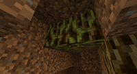 Root and Liveroot ig.png