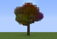 Rainbow Oak ig.png